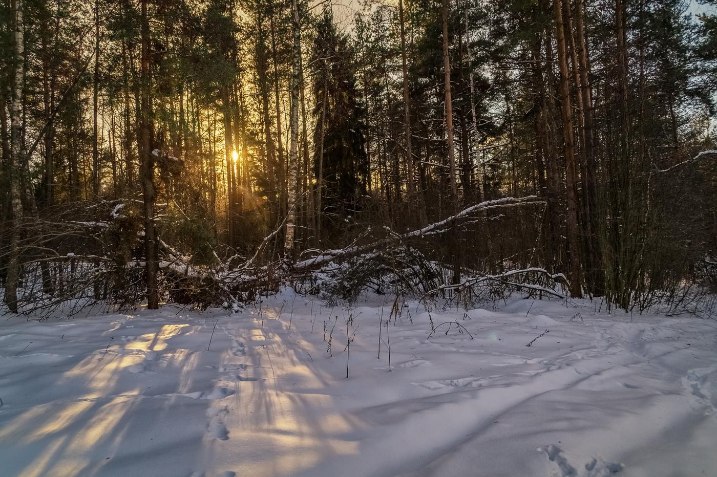 За лесом  википедия